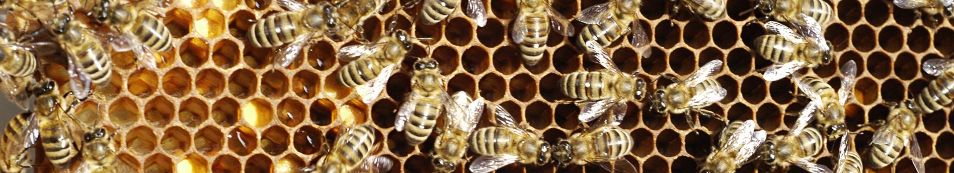 Biocertification of Honey